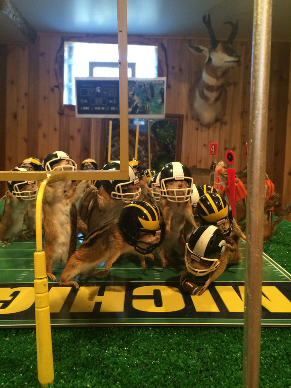 This photo taken Monday, Oct. 26, 2015, shows stuffed chipmunks portraying players on the final play of the Michigan State-Michigan NCAA college football game at the home of taxidermist Nick Saade in Lansing, Mich.  Michigan State's Jalen Watts-Jackson returned a fumble for the game-winning touchdown on Oct. 17. Saade tells the Lansing State Journal that the chipmunks were trapped by friends as nuisance animals. (Judy Putnam/Lansing State Journal via AP)  NO SALES; MANDATORY CREDIT