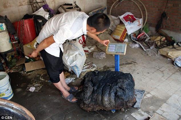 Chinese Farmer Wants To Trade 176 LB Magic Mushroom For A ...